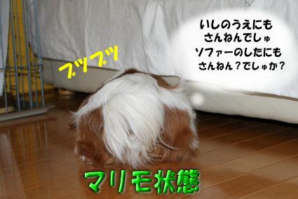 マリモ10
