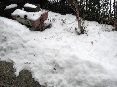 2011雪2