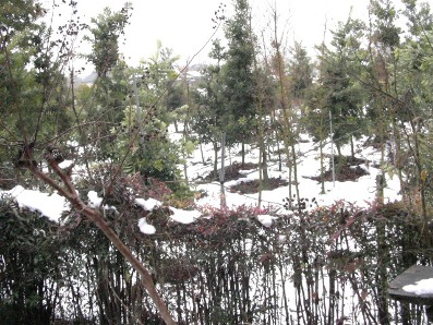 2011雪1