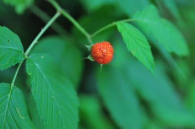 110724berry