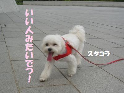 蟆冗伐螳カ蜀咏悄鬢ィ+1262_convert_20090925002656