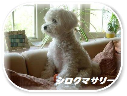 蟆冗伐螳カ蜀咏悄鬢ィ+1290_convert_20091009214136