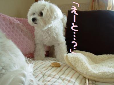 蟆冗伐螳カ蜀咏悄鬢ィ+1684_convert_20091009215207