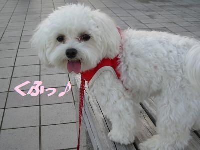 蟆冗伐螳カ蜀咏悄鬢ィ+1715_convert_20091010194331