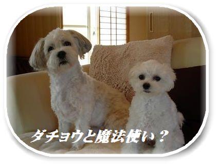 蟆冗伐螳カ蜀咏悄鬢ィ+146_convert_20091024170553
