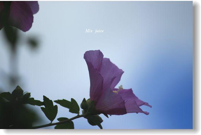 IMG_0992☆