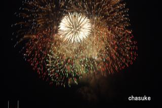 20090801_yoko-hana-01.jpg
