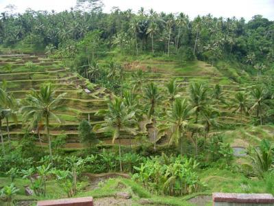 H21.7.1~インドネシア 100