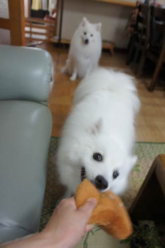 パン~~っ!