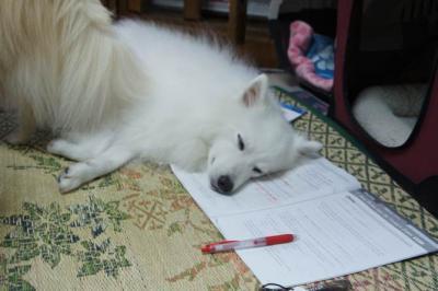 睡眠学習中でしゅ