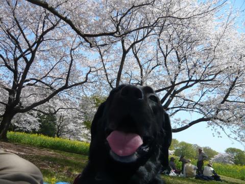 ゴチャゴチャ日記-4.23-4