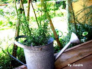 バケツと庭
