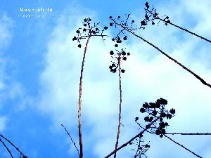 木の実と空JPG