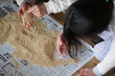100110 玄米