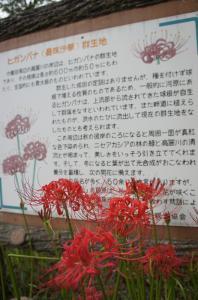 2011japan-0919-29.jpg