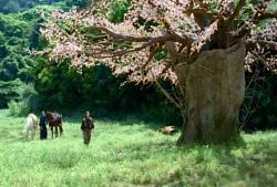 斉道を雷桜に連れて来た遊