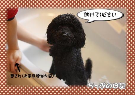 お風呂嫌い2