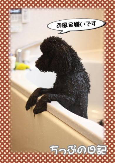 お風呂嫌い