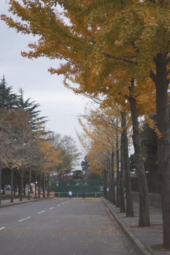運動公園(銀杏2)