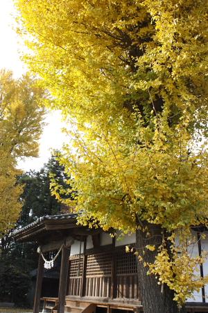 11-30さんぽ松尾神社