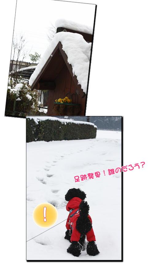 3-11雪の足跡