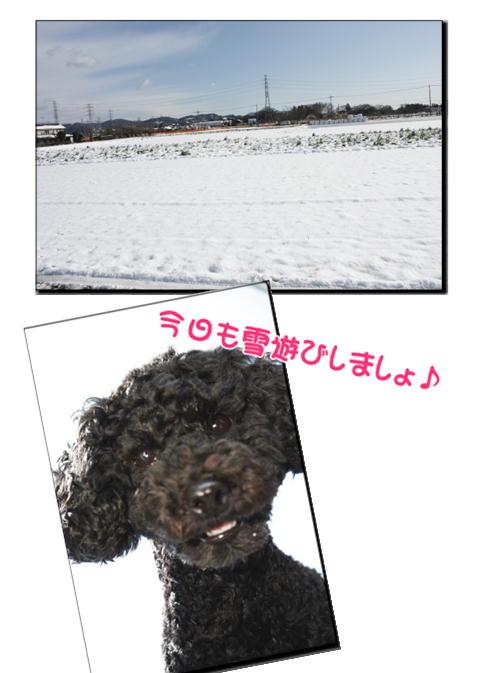 雪の次の日2