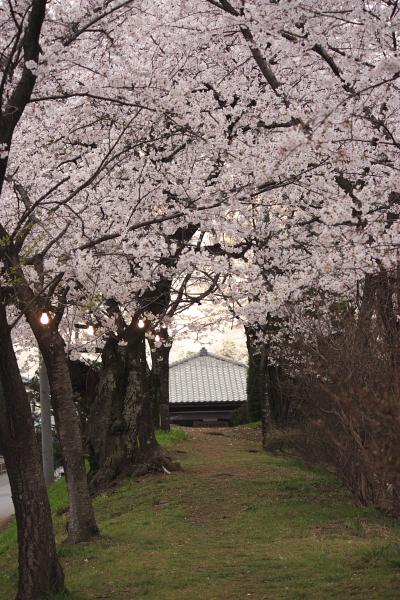 4-9城の内桜9