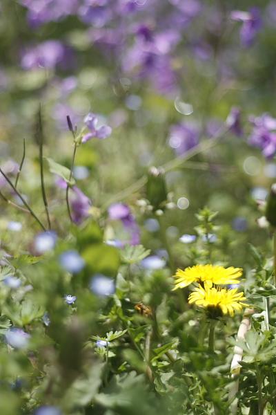 4-13道端の花4