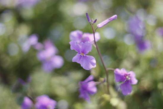 4-13道端の花