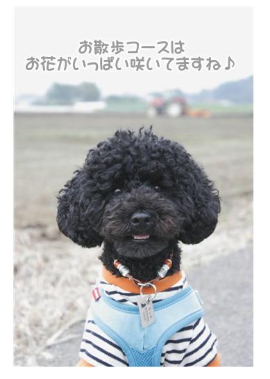 10-12お散歩