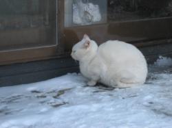 外で丸くなっていた白猫(=^..^=)