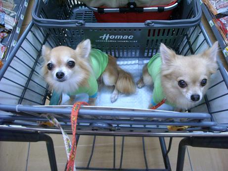 2ワン達ショッピングカートに乗って