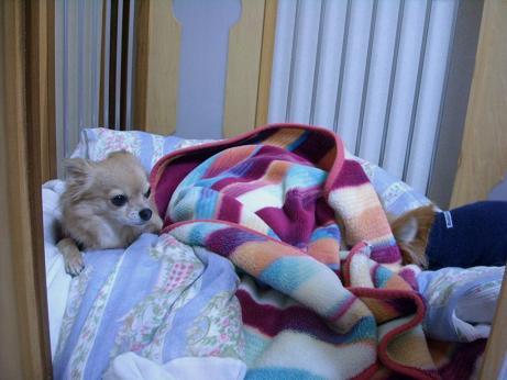12月6日チィ君完全に寝る