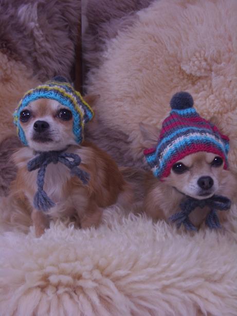 10年1月8日お帽子かぶっての2ワン達