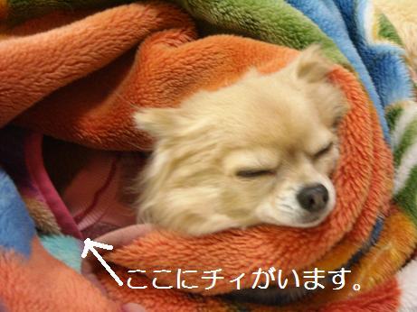 毛布の中に潜り込むチィ