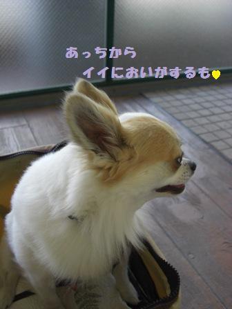 ちわップルアルバム