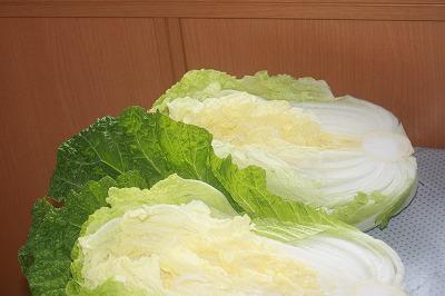 白菜11.14の2