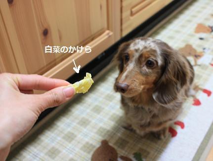 14Feb2011choco2.jpg