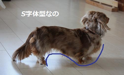 20100522choco2.jpg