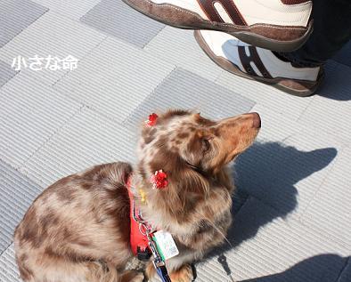 choco16Mar20113.jpg