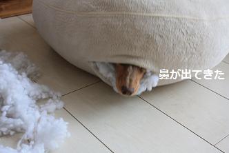 choco2Mar20113.jpg