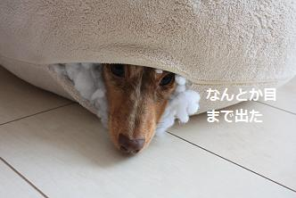 choco2Mar20114.jpg