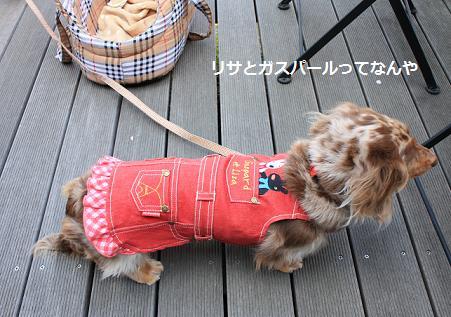 choco30Mar20115.jpg