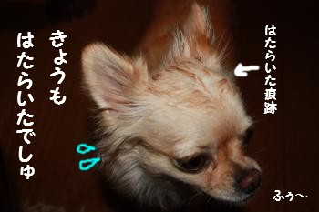 IMG_5404.jpg