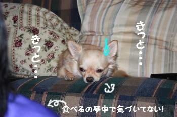 IMG_5678.jpg