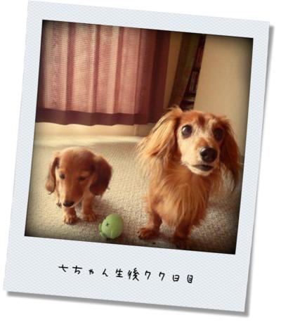 photokako-upload125241174039596.jpg