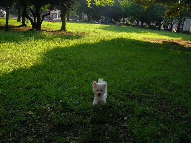 SANY0200_20110830181245.jpg