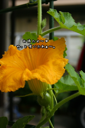 1006-03.jpg