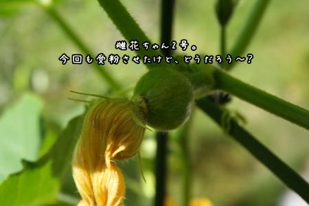 1006-07.jpg