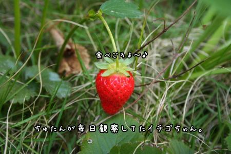 1006-09.jpg
